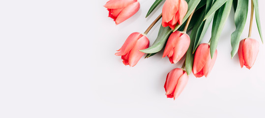 Foto op Canvas Tulp Pink tulips bouquet isolated on white background from above. Top view of red flower bud. Spring and easter greeting card design layout.