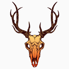 realistic deer skull with horns
