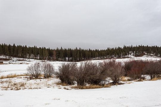 Bare brush in snowy field with thick treeline on gloomy day