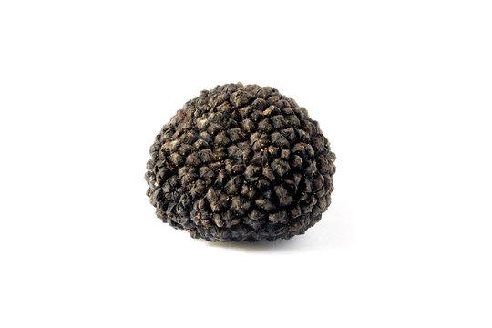 Black truffle isolated on white background