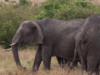 elephant in kenya Wall mural