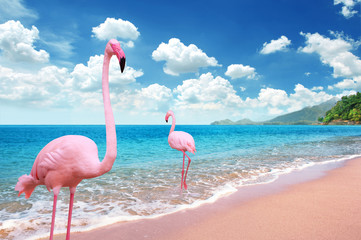 Foto auf Leinwand Flamingo Beautiful Sandy Beach with pink flamingo brids stand in the sea and bright blue sky fully with cloudscape