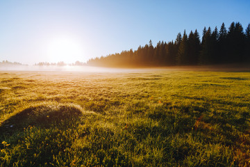 壁紙(ウォールミューラル) - Fantastic misty pasture in the sunlight. Locations place Durmitor National park, Montenegro.
