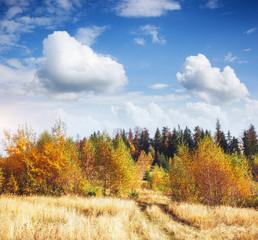 Wall Mural - Picturesque autumn valley in sunlight. Ukraine, Europe.