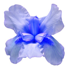 Blue iris flower isolated on white background. Easter. Summer. Spring. Flat lay, top view. Love. Valentine's Day. Floral pattern, object. Nature concept