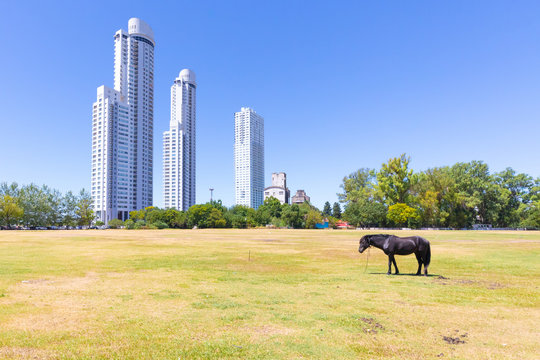 Argentina Rosario a horse and the Maui towers