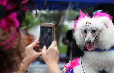 "A carnival reveller takes pictures of her dog as they take part in the ""Blocao"" or dog carnival parade during carnival festivities in Rio de Janeiro"