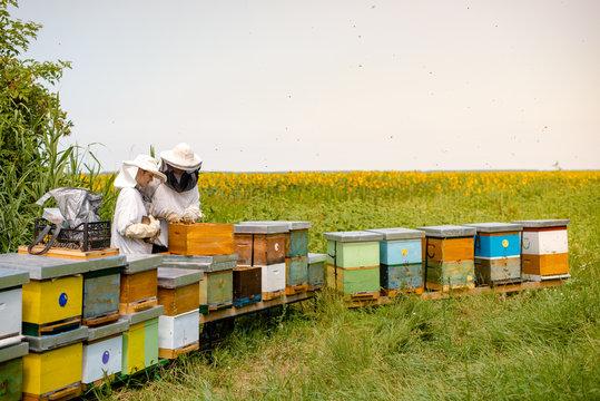 Beekeepers working beside sunflowers field