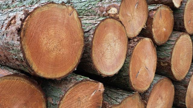 Europäische Lärche - Nadelholz - Stammholz