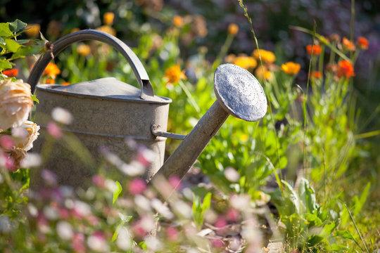 Petit jardin fleuri au printemps et arrosoir.