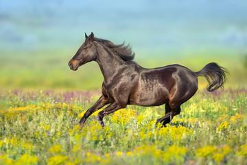 Bay horse with long mane free run in flowers meadow Papier Peint