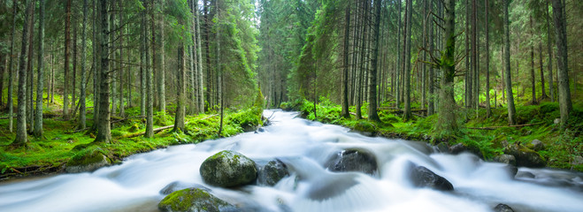 Photo Blinds Forest river river rushing through green pine forest