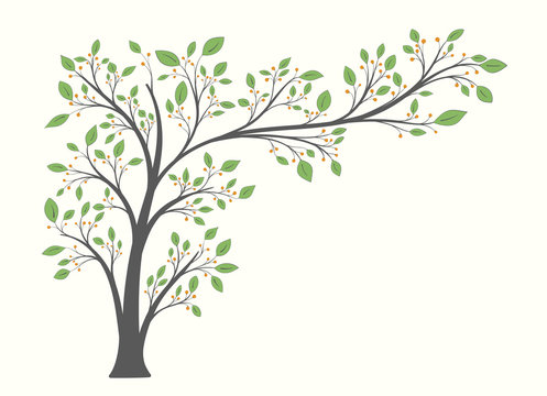 Flowering tree with a long branch with green leaves and berries isolated on a light background