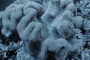 Keuken foto achterwand Koraalriffen coral reef macro / texture, abstract marine ecosystem background on a coral reef