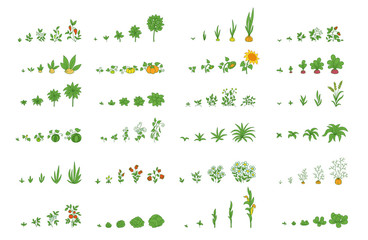 Agricultural plants, growth set. Growing plants animation progression. Vector planting infographic.