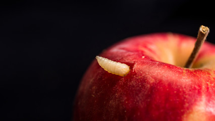 Worm peeks out of red apple