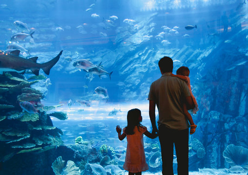Father with daughters watching fish in oceanarium