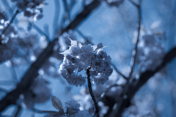 Canvas Prints Floral Dark blue floral background / Floral dark blue nature background.