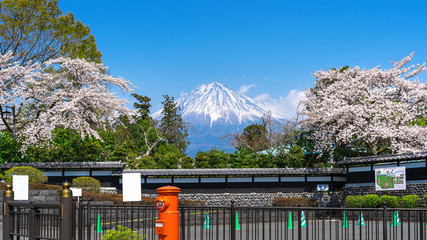 Wall Mural - Fuji mountain and cherry blossom in spring, Fujinomiya in Japan.