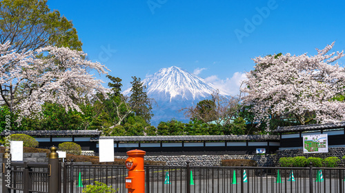 Wall mural Fuji mountain and cherry blossom in spring, Fujinomiya in Japan.