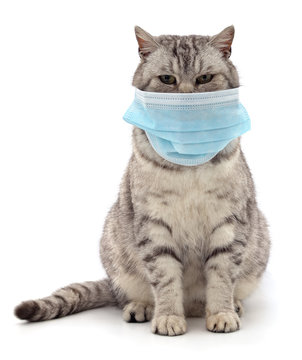 Cat in medical mask.