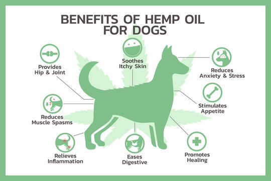 benefits of hemp oil for dogs infographic, healthcare and medical about cannabis, hemp, marijuana, and weed, vector flat symbol icon illustration in horizontal design