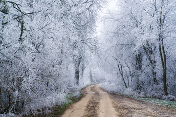 Dirt roar in the winter forest, hoarfrost on the trees