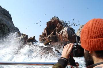 hombre fotografiando leones marinos desde un bote