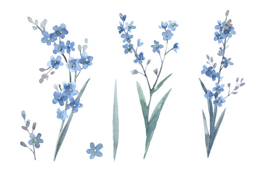 Set of forget-me-nots. Cute watercolor illustration isolated on white background. Elements for spring floral design. Shades of blue.