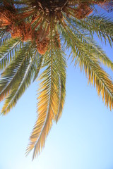Liście palmy kokosowej na tle błękitnego nieba