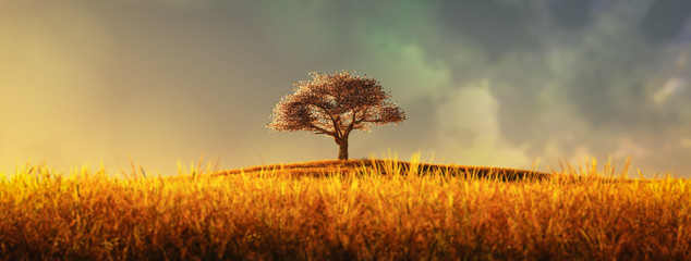 Spoed Fotobehang Bomen lonely tree in a cultivated field
