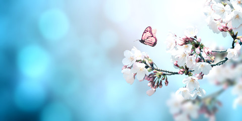 Fototapete - Beautiful magic spring scene with sakura flowers