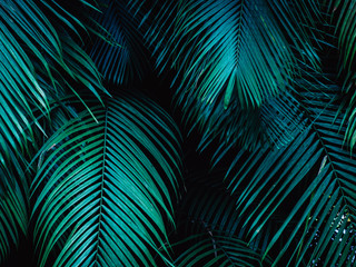 Foto auf Leinwand Palms Tropical palm leaf background