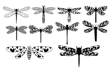 dragonfly vector set collection graphic clipart design