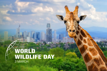 Foto op Aluminium Natuur World Wildlife Day. Text on giraffe background
