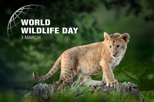 World Wildlife Day. Text  on lion cub background