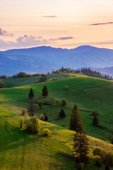 mountainous countryside in springtime at dusk. trees on the rolling hills. ridge in the distance. clouds on the sky. sunny rural landscape of carpathians