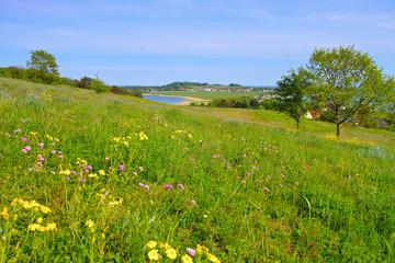 Klein Zicker Blumenwiese auf der Insel Rügen -  spring flower meadow on island of Ruegen