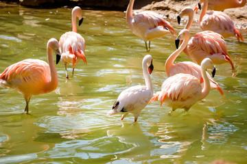 Foto op Canvas Flamingo small group of flamingo close up
