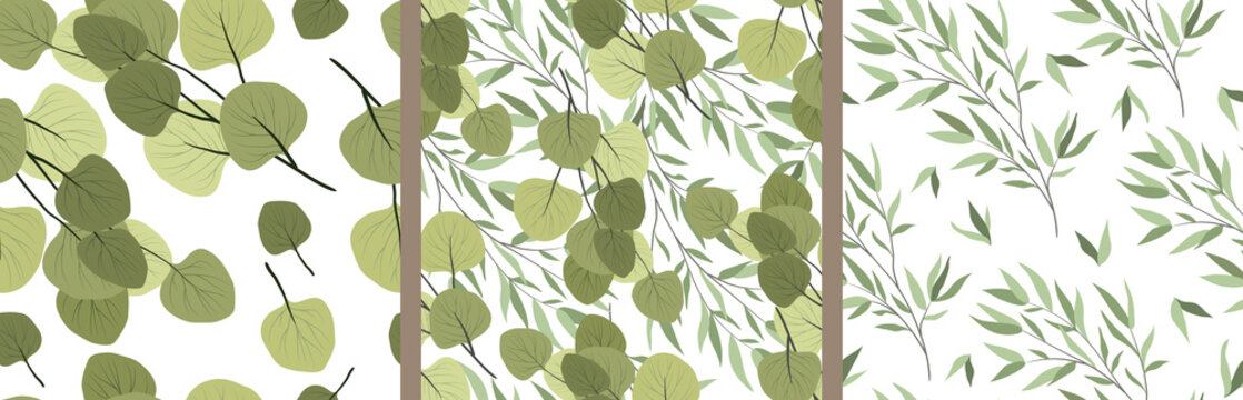Set of seamless patterns with branches of a willow and eucalyptus on a white background. Vector