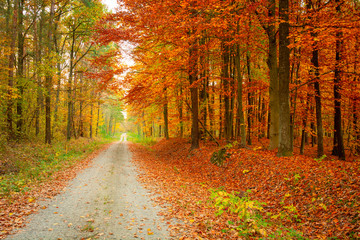 Photo sur Aluminium Rouge traffic A straight road through a colorful autumn forest, autumn view