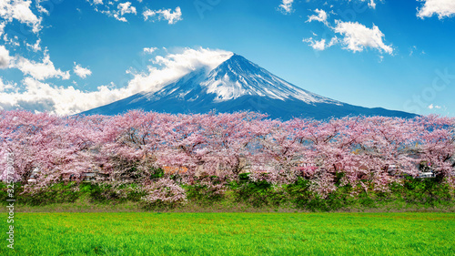 Wall mural Fuji mountain and cherry blossom in spring, Japan.