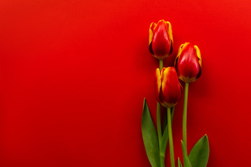 Keuken foto achterwand Tulp Banner with a bouquet of red tulips on red background. Flat lay with flowers, top view with copyspace. International Women's Day, Mother's Day concept. Valentines, spring background. floral mock up.