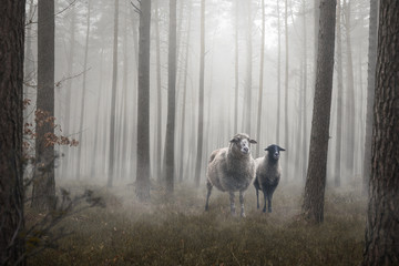 Foto op Aluminium Schapen Two sheep standing inside a mystic forest
