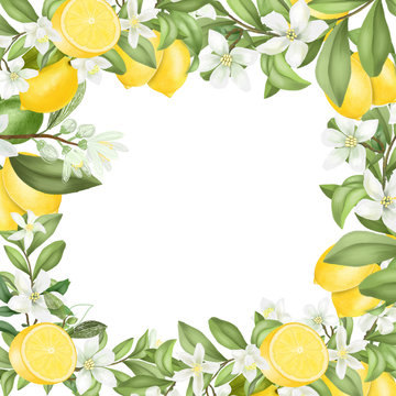 Card template, frame of hand drawn blooming lemon tree branches, flowers and lemons on white background