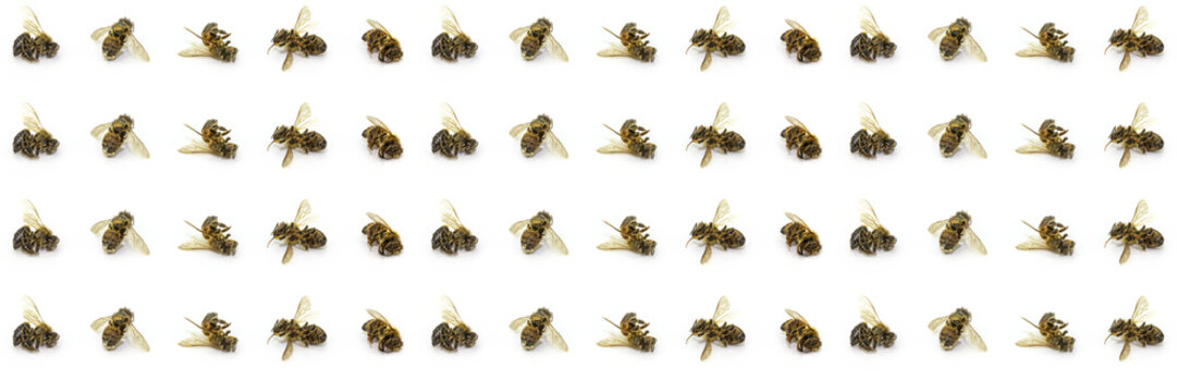 lines of dead bees header or background, decline in bees due to habitat destruction, pollution and pesticide use