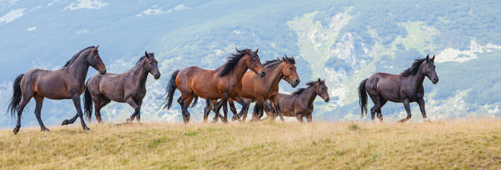 Wild horses roaming free in the mountains, under warm evening light