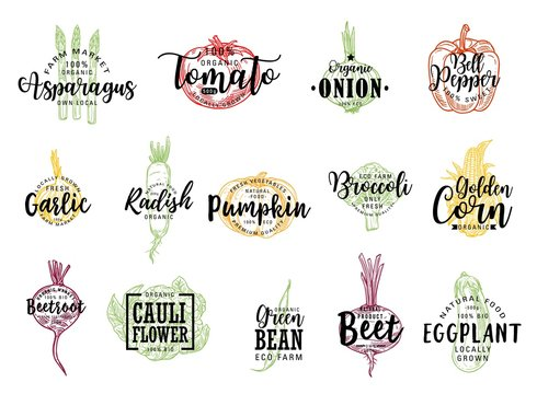 Vegetable vector sketches with letterings of farm food. Isolated tomato, bell pepper, eggplant and broccoli, garlic, onion, corn, radish and bean pod, cauliflower, pumpkin, asparagus and beet