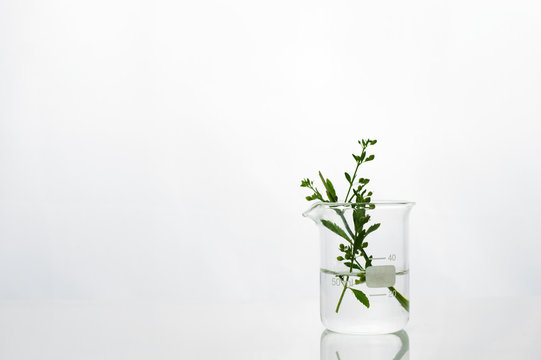 green herbal leaf water in beaker of white cosmetic development laboratory background