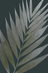 Dry decoration tropical silver white leaf on a dark background
